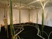 竹のオーケストラ