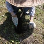 畑プロジェクト4月28日の様子