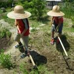 畑プロジェクト2012 5月19日の様子