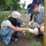 畑プロジェクト6月15日の様子