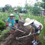 畑プロジェクト6月29日の様子