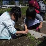 畑プロジェクト4月5日の様子