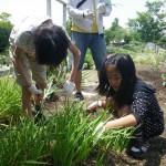 畑プロジェクト5月24日の様子