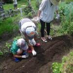 畑プロジェクト7月12日の様子