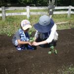 畑プロジェクト9月6日の様子